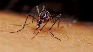 Veja quais são as cidades com a maior população de mosquitos na Flórida