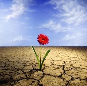 flores da vida
